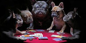 video poker bulldogs